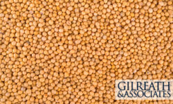 No Agreement Reached in the Soybean Seed Lawsuit
