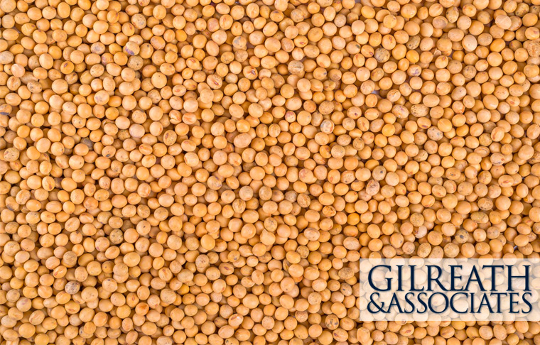 soybean seed lawsuit